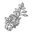branch with rose flower and buds leaves sketch vector image vector image