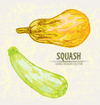 digital detailed line art color squash vector image vector image