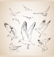 sketch of seagulls hand drawn vector image vector image