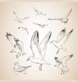 sketch seagulls hand drawn vector image vector image