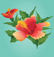 Sunset Hibiscus vector image vector image