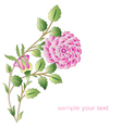 Ottoman pink roses flower series vector image