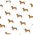 unusual seamless pattern with cute dog breed vector image vector image