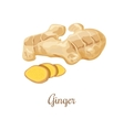 Fresh ginger and slices vector image