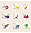 fruit alphabet vector image