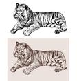 original artwork tiger black sketch drawing animal vector image