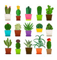 cactus houseplants in flower pots set vector image