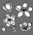 Engraved cherry blossom vector image vector image