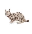 hand drawn lynx vector image