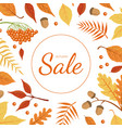 sale banner template with colorful autumn leaves vector image vector image