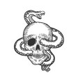 snake in human skull sketch vector image