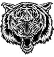 angry tiger vector image vector image