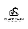 black swan photography vector image