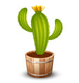 cactus in a pot vector image vector image
