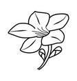 alamanda flower floral hand drawn design sign vector image vector image