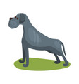 cane corso dog purebred pet animal standing on vector image