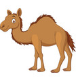 cartoon camel isolated on white background vector image