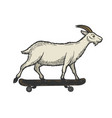 goat on skateboard sketch engraving vector image vector image