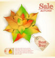 september natural autumn sale poster vector image vector image