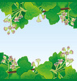 frame currant leaves and flowers vector image vector image