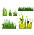 green grass border plant lawn nature meadow vector image vector image