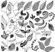 Leaf variation vector image vector image
