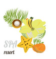 Starfish seashells sea stones and palm leaves vector image