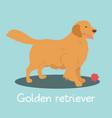 an depicting golden retriever dog cartoon vector image