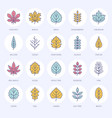 autumn leaves flat line icons leaf types rowan vector image vector image