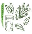 bay leaf spice and herbal seasonings sketch herbs vector image vector image