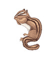 hand drawn chipmunk vector image vector image