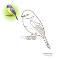 Yellow robin bird coloring book vector image vector image