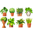 A collection of the different pot plants vector image vector image
