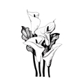 Calla lilly floral black and white vector image vector image