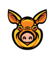 funny smiling orange pig vector image vector image