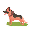 german shepherd dog purebred pet animal standing vector image