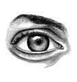 anatomy human eye hand draw vintage clip art vector image vector image