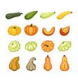 harvest ripe pumpkins and zucchini set juicy vector image