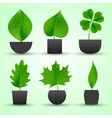 simple nature leaf of tree in pot colorful icons vector image