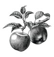 apple branch hand draw vintage clip art isolated vector image vector image