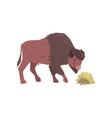 buffalo eating hay bison animal side view vector image