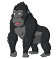 cartoon funny gorilla on white background vector image vector image