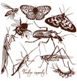 collection of antique hand drawn insects vector image