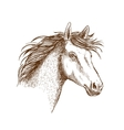 Sketch of horse head for equine design vector image vector image