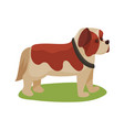 st bernard dog purebred pet animal standing on vector image vector image