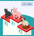 cats show isometric composition vector image