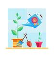 garden on the windowsill vector image