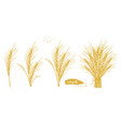 golden wheat and barley grain set vector image vector image