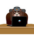 russian hacker bear and laptop ip technology in vector image