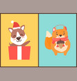teddy bear in santa claus hat in gift box squirrel vector image vector image